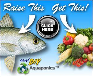 easy! diy aquaponics