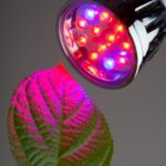 LED Grow Light for Aquaponics