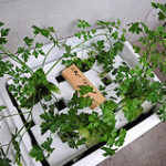 Aquaponics Demystified
