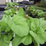 Aquaponics Gardening — Important Upkeep and Testing